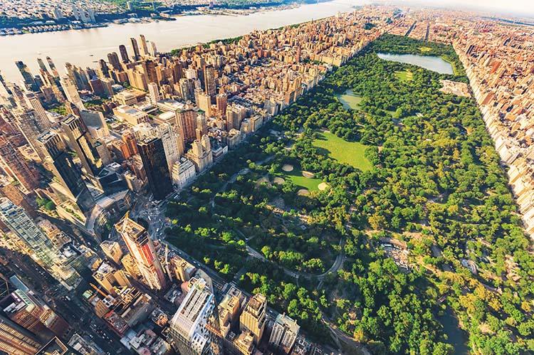 avis barrios de nueva york 1