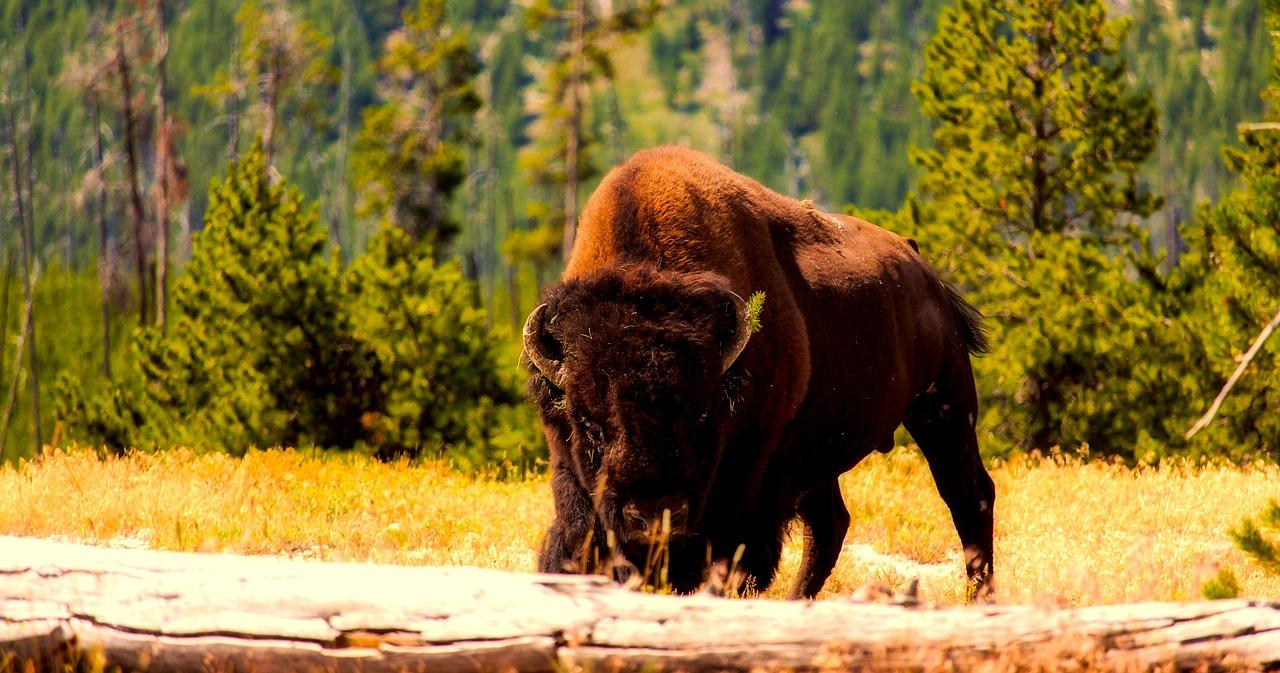 avis parques nacionales