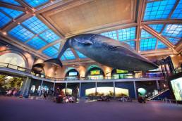Los más famosos museos en Nueva York para visitar
