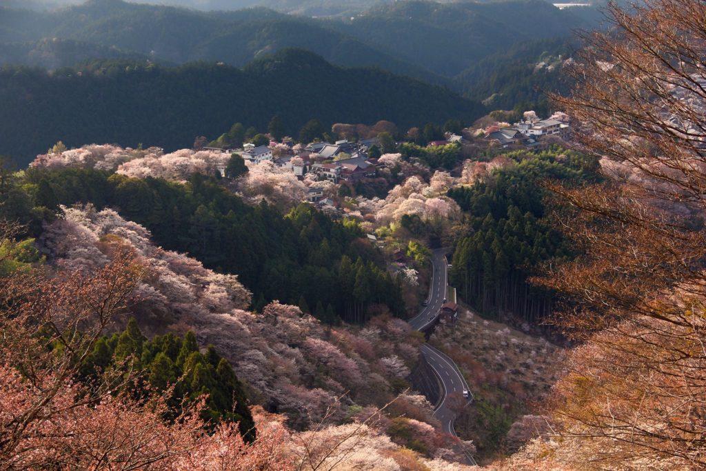 Monte Yoshino, el mejor lugar para ver la temporada de cerezos en Japón.