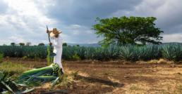 Jimador en ruta del tequila