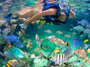 Nadar con snorkel por Xel-Há.