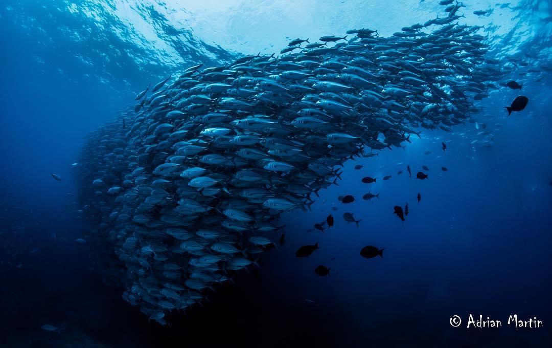 Banco de peces en Cabo Pulmo.