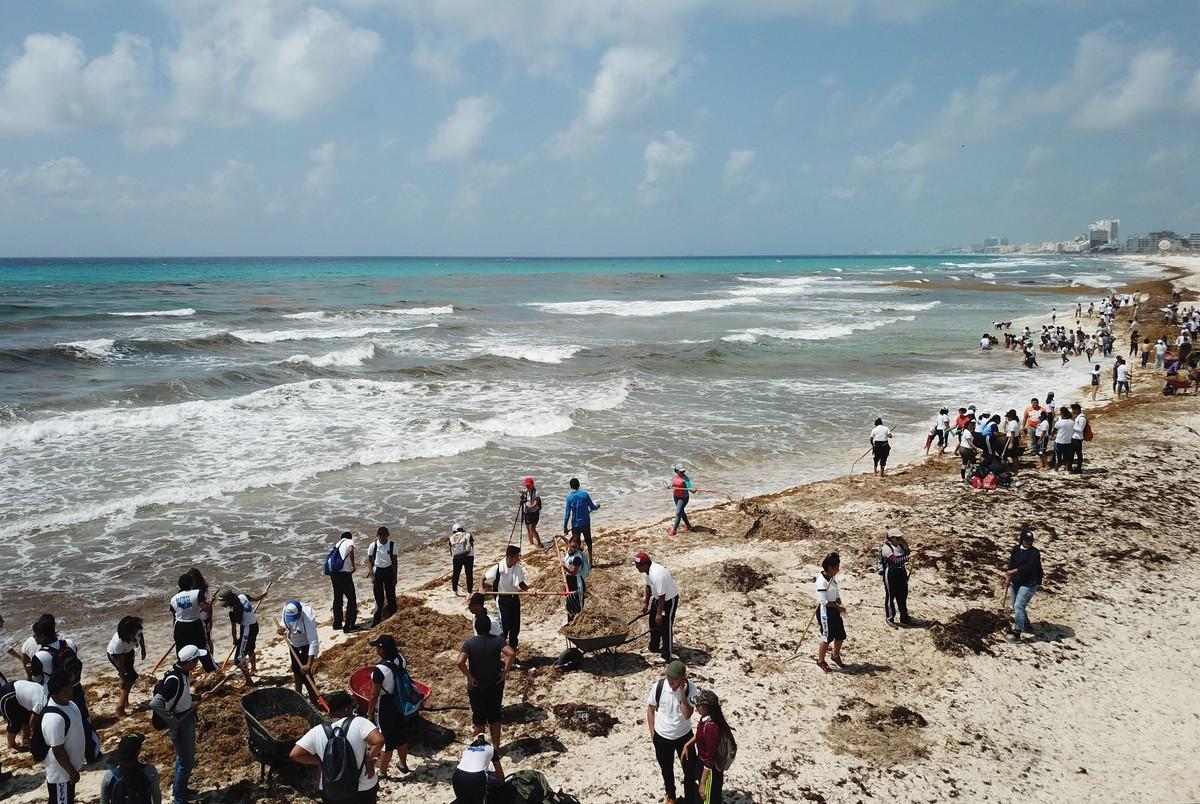 Limpieza de sargazo en las Playas de Cancún.