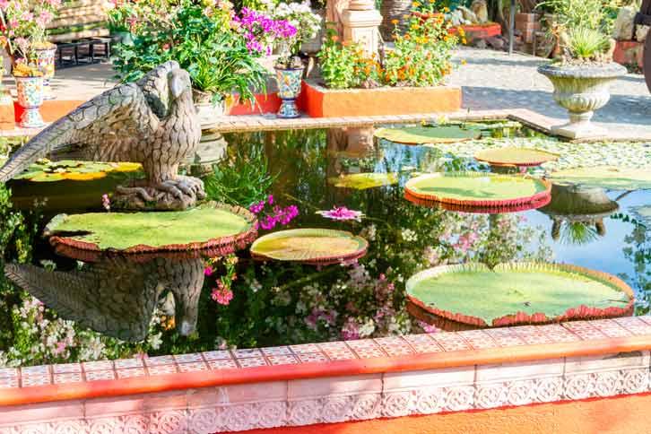 Avis renta de autos, Roadtrip a Vallarta-Nuevo Vallarta, jardín botánico