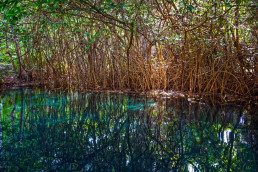 Cenotes imperdibles que debes visitar en auto
