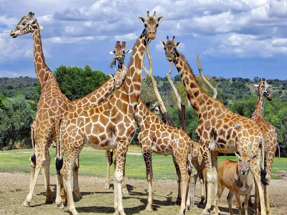 Roadtrip familiar en un auto Avis, visitando Africam Safari