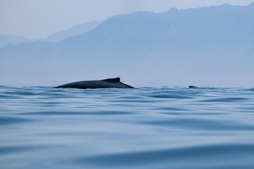 Avis renta de autos, Roadtrip y avistamiento de ballenas jorobadas